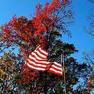 Autumn Americana by NatureGreeting Cards ©ccwri