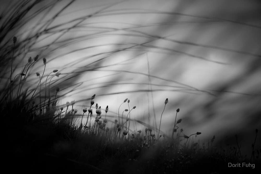 Wilderness by Dorit Fuhg