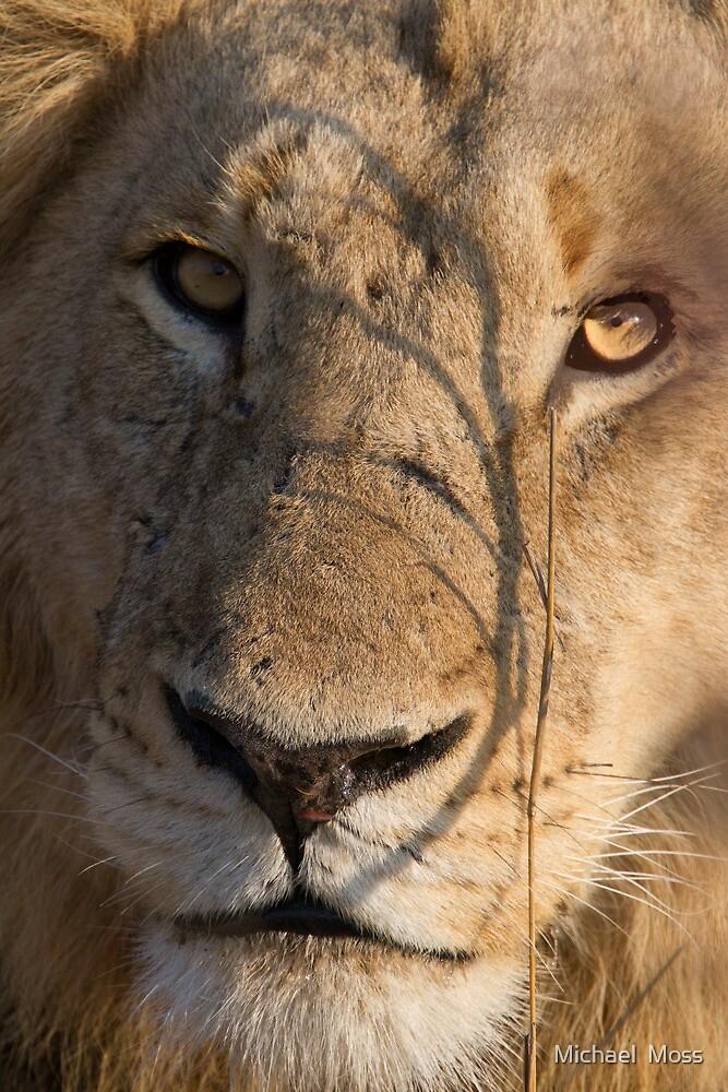 Majingilane - Male Lion - Close Up ! by Michael  Moss