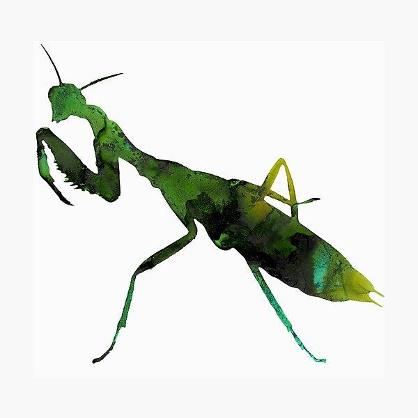 Praying Mantis Green Watercolor Photographic Print