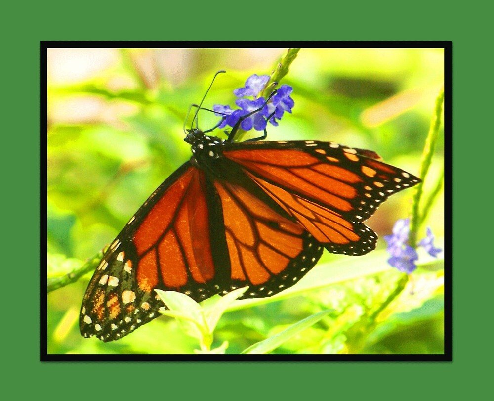 Pretty Butterfly by lynell