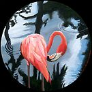 """Flamingo. (at Jungle Gardens- Sarasota, Florida)"" by amyglasscockart"