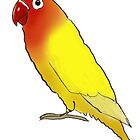 Fischer's lovebird by lobitos