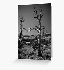 Desolate Greeting Card