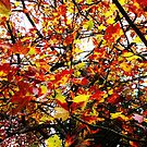 A love of Autumn leaves  by DearMsWildOne