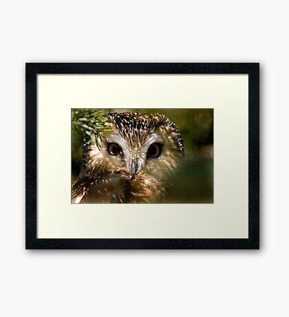 Northern Saw Whet Owl Framed Print