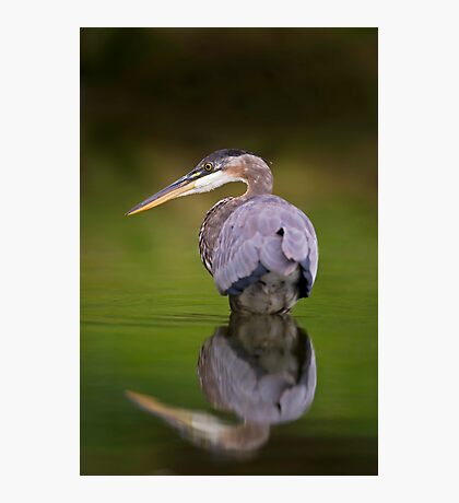 GBH reflection Photographic Print