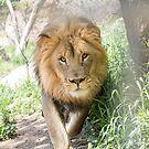 African Pride & Joy by starbucksgirl26