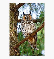 LEO - Long Eared Owl - Ottawa, Ontario Photographic Print