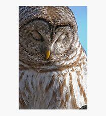 Barred Owl in Tree - Brighton, Ontario Photographic Print