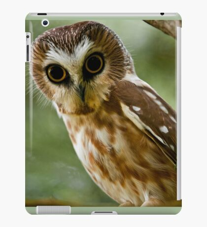 Northern Saw Whet Owl On Branch iPad Case/Skin