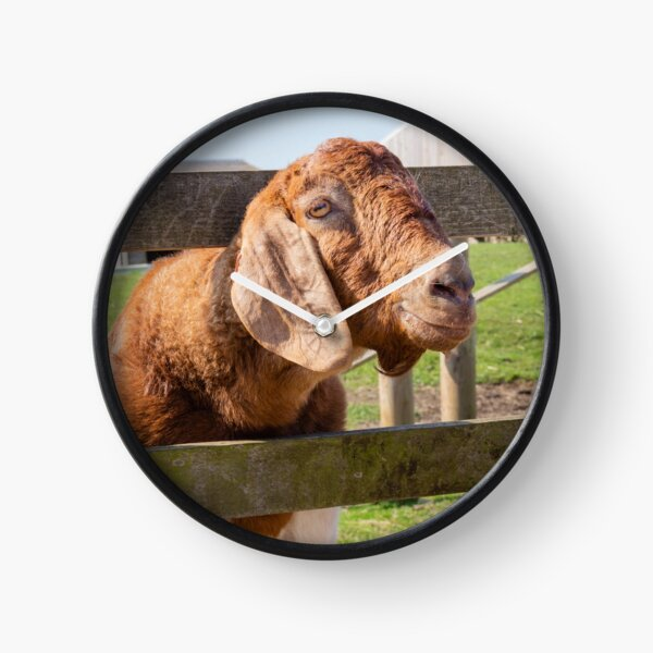 Goat on a fence Clock