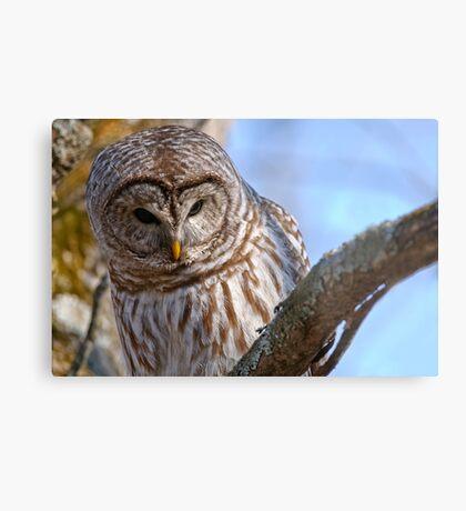 Barred Owl - Brighton Ontario Metal Print