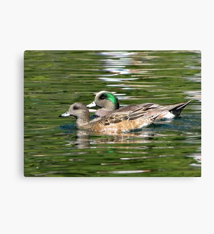 American Wigeon ~ Pair Canvas Print