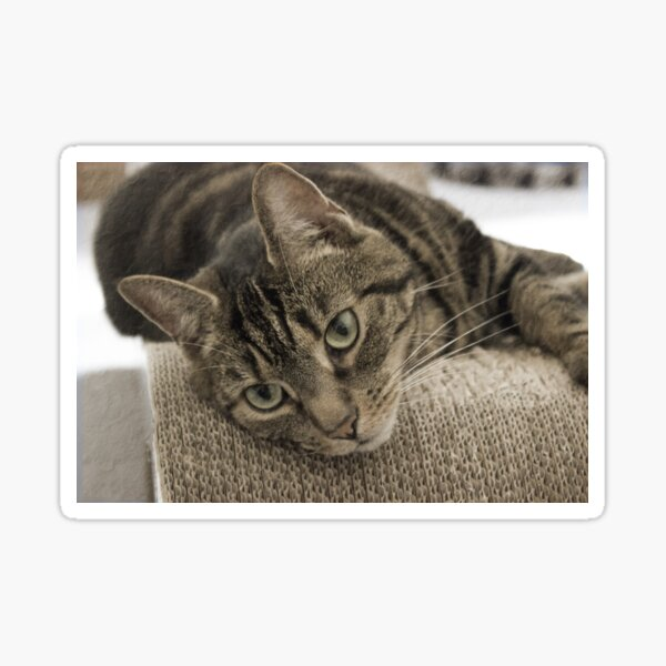 Sepia Vintage-style Cat Photography  Sticker