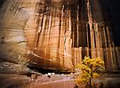 Autumn in the White House Ruin, Canyon de Chelly by Daniel H Chui
