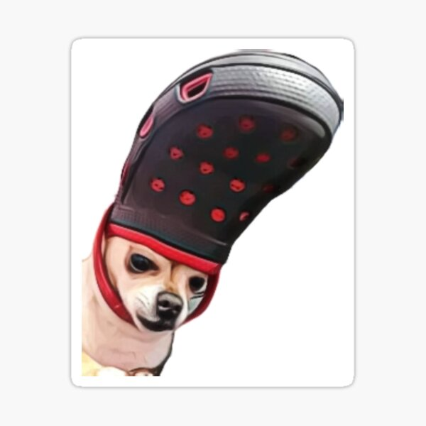 Chihuahua with croc on the head, digital  Sticker