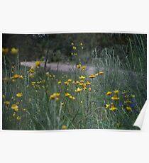 Roadside Wildflowers Poster