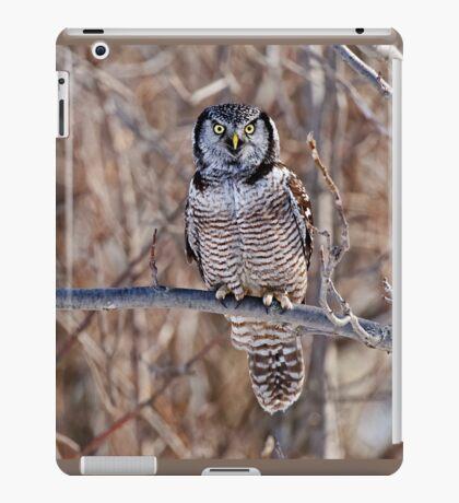 Northern Hawk Owl iPad Case/Skin
