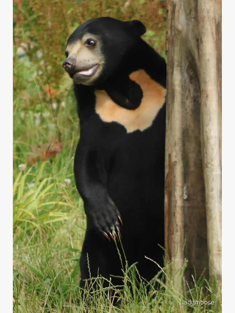 Sun Bear by Ladymoose