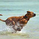 Aqua Dash by Scott Carr