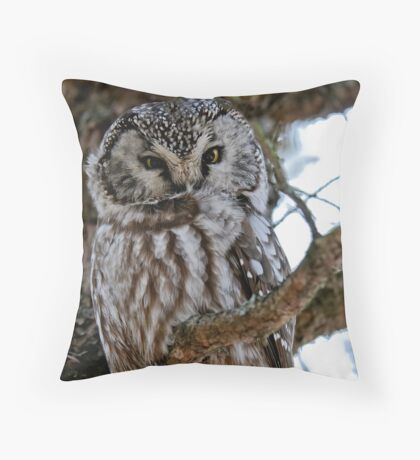 Boreal Owl - Amherst Island, Ontario - 3 Throw Pillow
