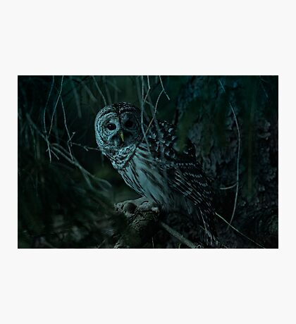 Barred Owl _ Pseudo Night shot Photographic Print