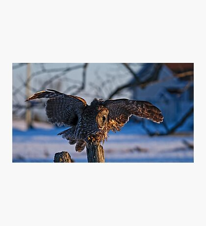 Great Gray Owl on Post - Dunrobin Ontario Photographic Print