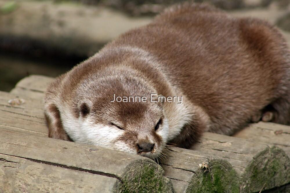 Sleepy asian otter by Joanne Emery
