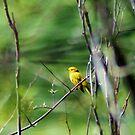 A Bird in the Bush.... by teresa731