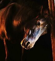 Sunset in the stables by Alan Mattison