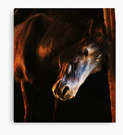 Sunset in the stables Canvas Print