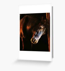 Sunset in the stables Greeting Card