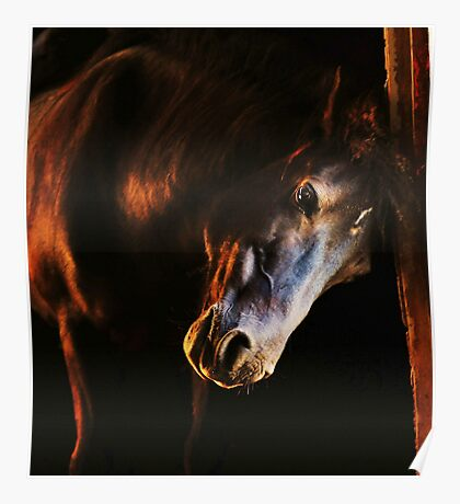 Sunset in the stables Poster