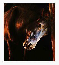 Sunset in the stables Photographic Print
