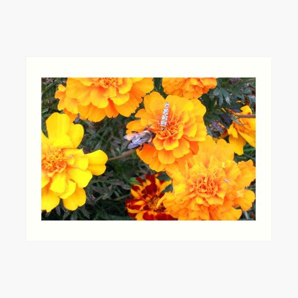 Sweet Abundance Art Print