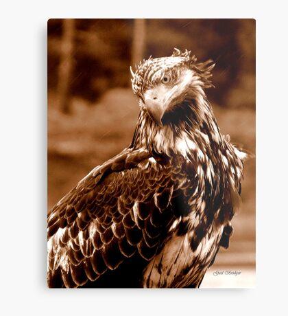 Young Bald Eagle Metal Print