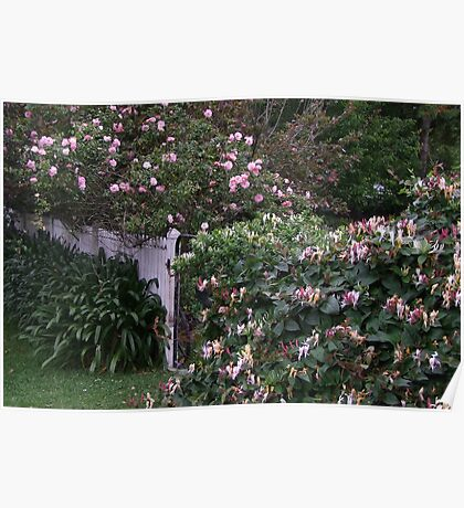 A Gate Covered in Honeysuckle and Roses! Poster
