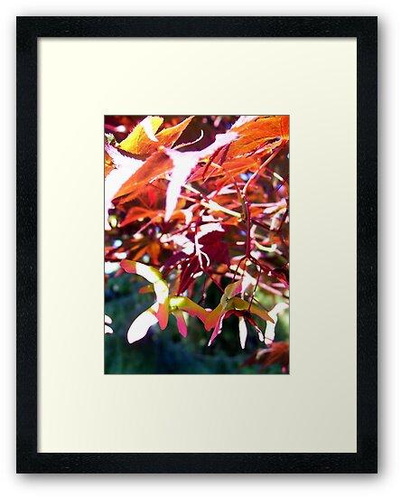 Sunlight thru Japanese Maple  by Lorrie Davis