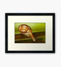 Snail Jump! Framed Print