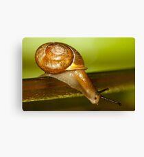 Snail Jump! Canvas Print