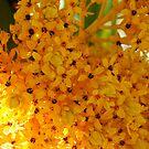 Blossoms by D. D.AMO