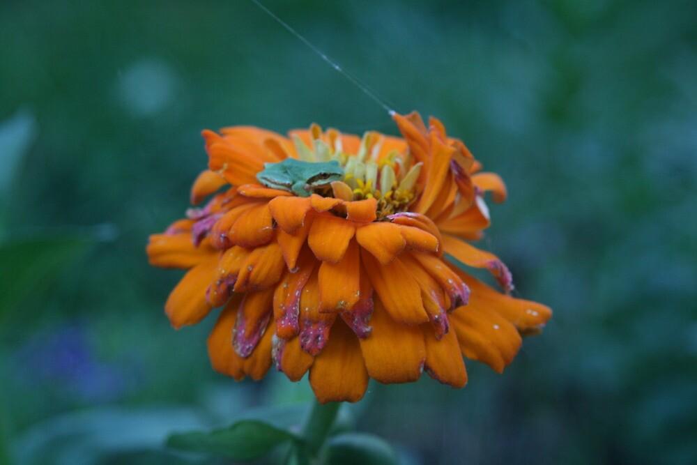 Green Peeper on orange by Lorrie Davis