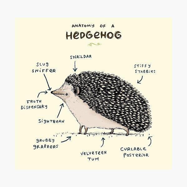 Anatomy of a Hedgehog Photographic Print