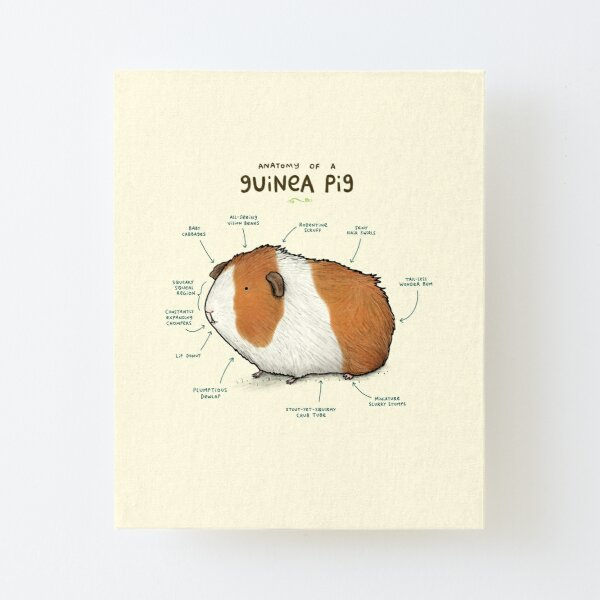 Guinea Pig Wall Art Redbubble