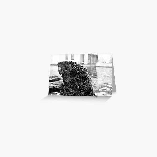 Northern Fur Seal Greeting Card