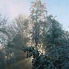 Sunrays through the trees by Lorrie Davis