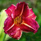 Day Lily, 9 AM, Rain by Bryan D. Spellman