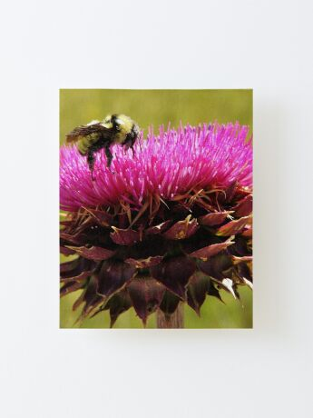 Bumble Thistle Canvas Mounted Print