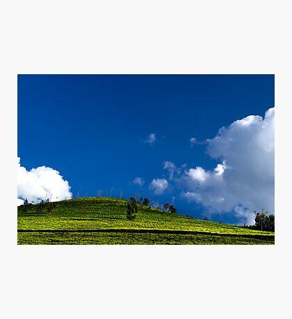 Green Tea Photographic Print